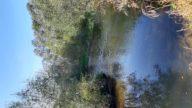 Bujna obvodna vegetacija